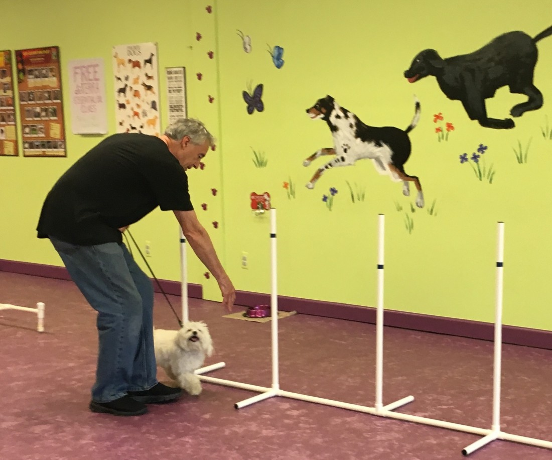 Expert Dog Trainers In Walled Lake MI - Trust & Obey Pawsitive Dog Training - Fun_with_Fido1