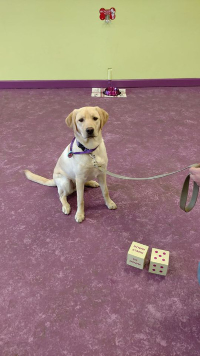 Professional Dog Training Classes In Plymouth MI - Trust & Obey Pawsitive Dog Training - TrustObey6