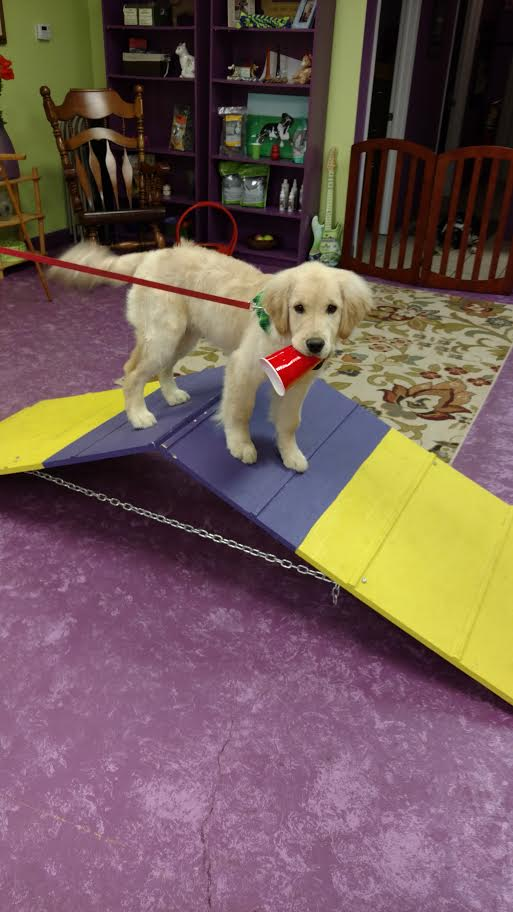 Private Dog Training Lessons Plymouth MI - Trust & Obey Pawsitive Dog Training School - unnamed